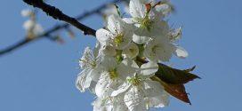 Frühlingsimpressionen von Peter Witzelsteiner