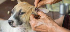Zeckenschutz für Hunde – So schützt Du Deinen Hund vor Zecken