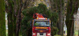Straßensperren in Mondsee: Achtung, hier kommt der Mondseer Christbaum!